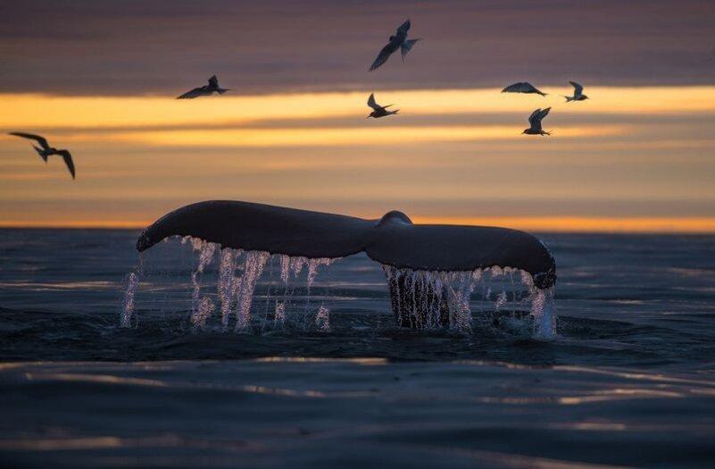 پرواز پرستویهای دریایی بالای سر نهنگ +عکس