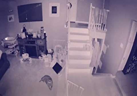 بازبینی دوربین مداربسته اهالی خانه را شوکه کرد