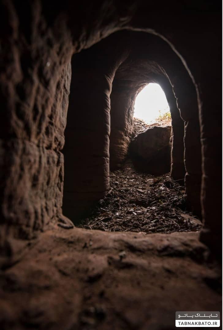 لانه خرگوشی که اسرار شوالیههای معبد را افشا کرد