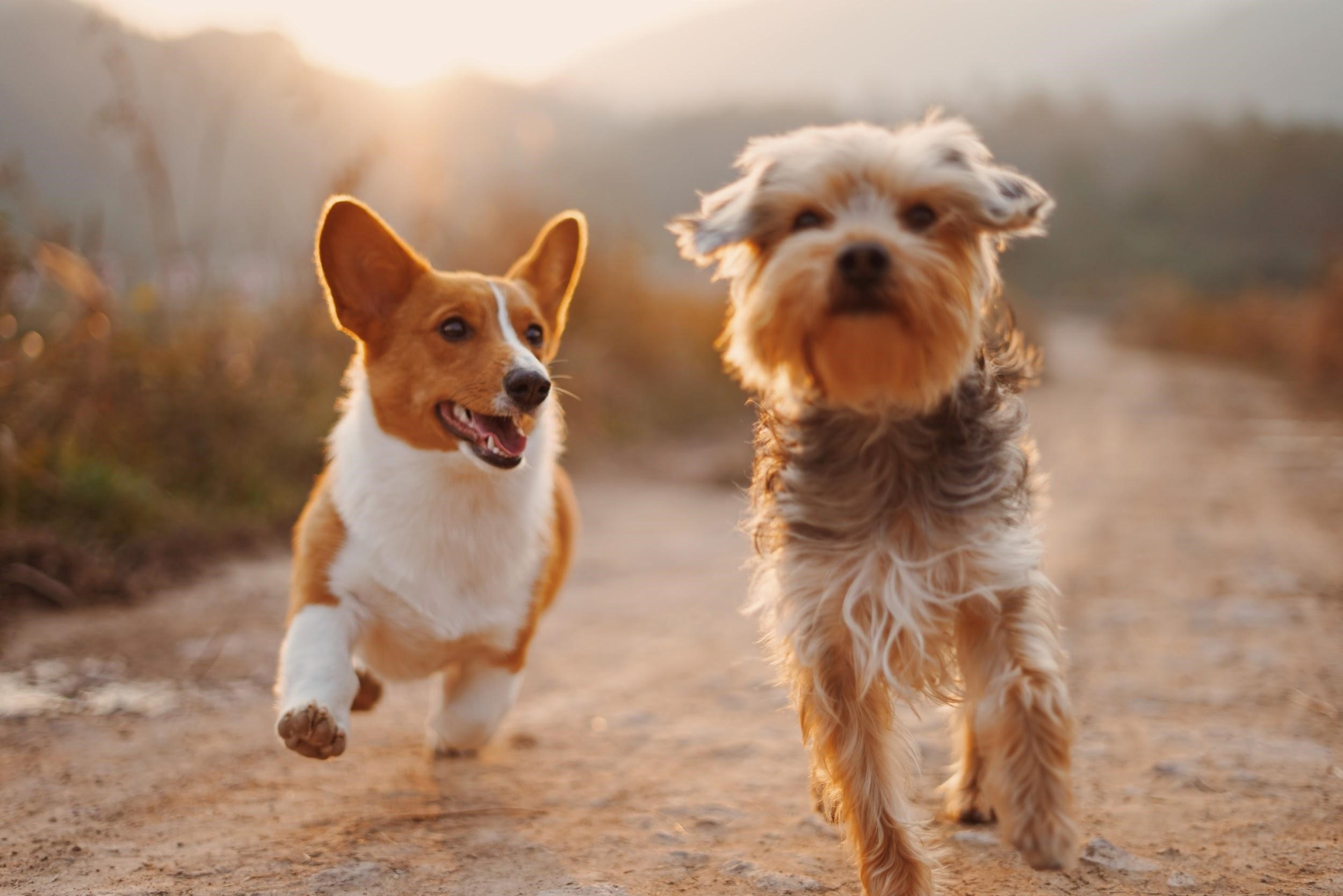 روشهای از بین بردن کک در حیوانات خانگی