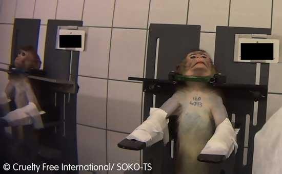 درزِ تصاویر دلخراش از یک مرکز آزمایشی در آلمان