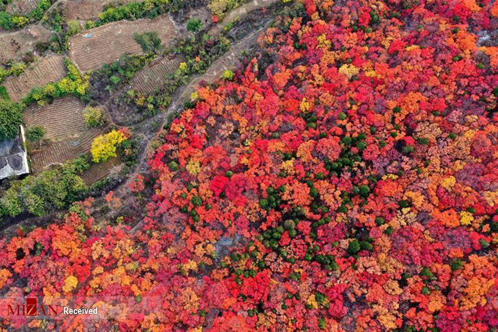 زیباییهای فصل پاییز در چین
