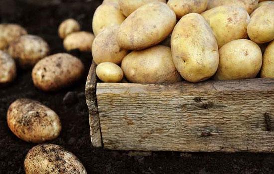 پوست سیبزمینی چه تأثیری بر سلامتی دارد؟
