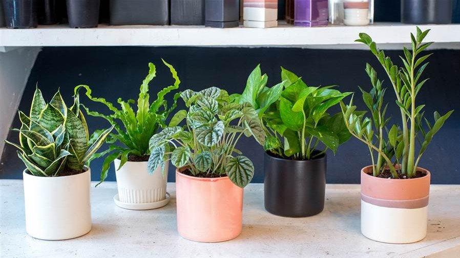 گلدانهای آرامشبخشی که میتوانید در خانه از نگه دارید
