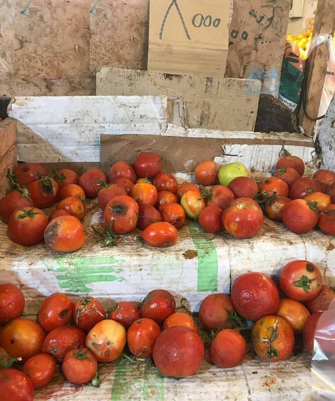 گوجه گندیده کیلویی ۸ هزار تومان+ عکس