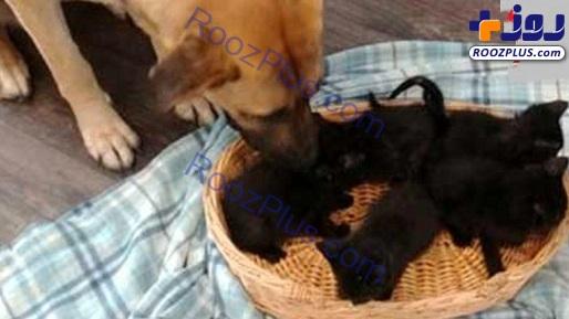 سگی که در سرما از 5 بچه گربه نگهداری می کند +عکس
