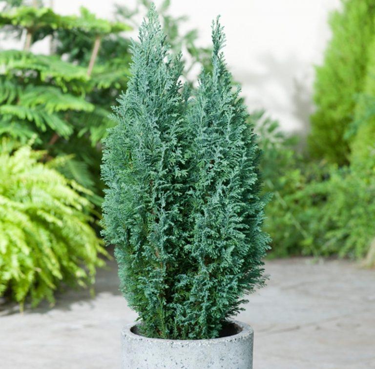 بهترین گیاهان آپارتمانی در پاییز و زمستان؛ ۸ نکته برای انتخاب گیاهان مقاوم به سرما