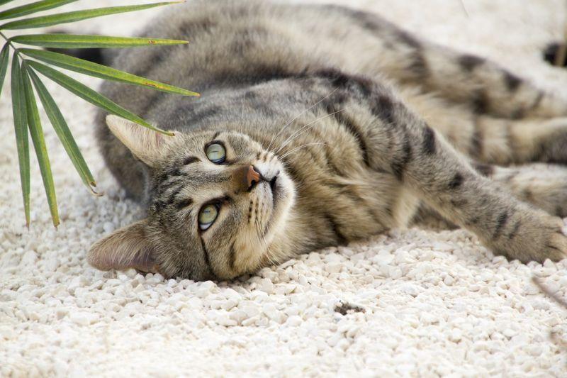 ثبت ابتلای گربهها به ویروس کرونا