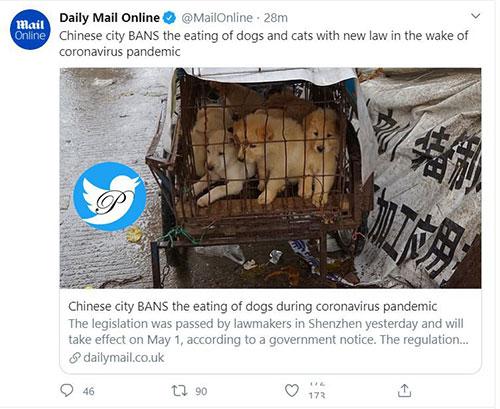 خوردن سگ و گربه در چین ممنوع میشود