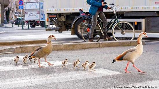 عکس روز؛ زمانی برای آسایش و گردش پرندگان