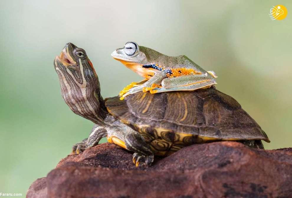 دوستی غیرمعمول حیوانات