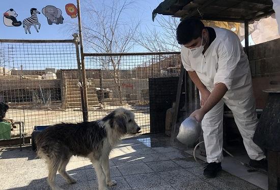 پناهگاه سگها در شیراز+عکس