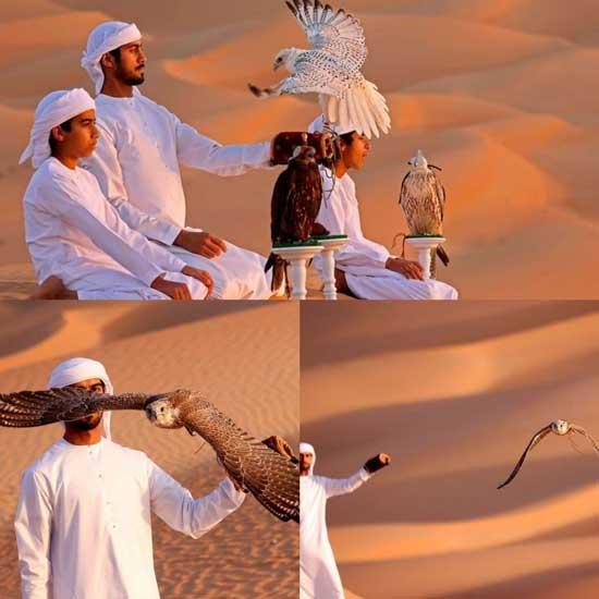 تربیت پرندگان شکاری در صحرای امارات+عکس