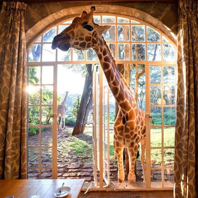 هتلی عجیب و غریب در نایروبی کنیا + عکس