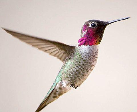 پرنده ای با ویژگی خارق العاده