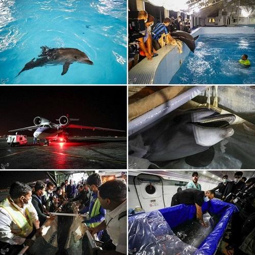 انتقال تنها دلفین برج میلاد به کیش +عکس
