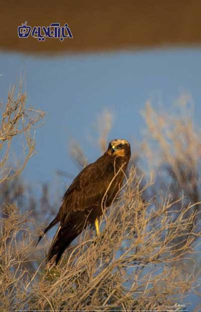 لحظه حیرتانگیز و ناباورانه شکار ماهی توسط عقاب