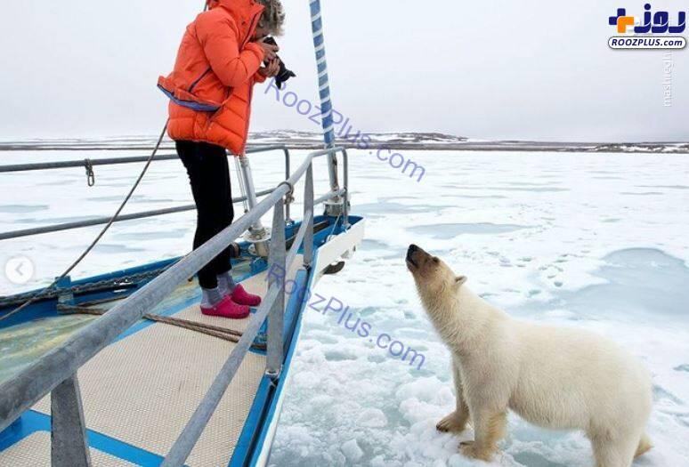 تلاش خرس قطبی برای سوار شدن بر روی قایق+عکس