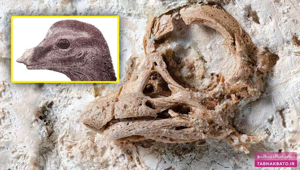ذوقزدگی دانشمندان از پیدا شدن فسیل جنین دایناسور