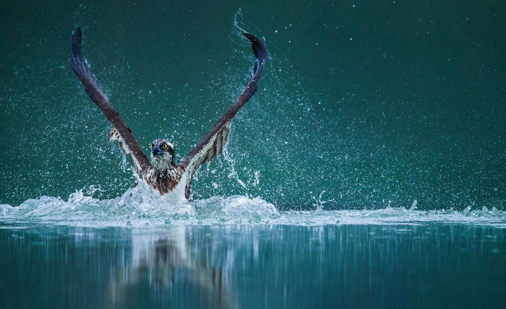 شکار پرنده شکارچی توسط دوربین + عکس