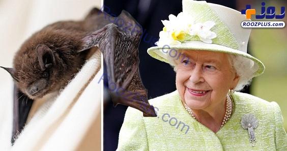 یکی از عجیب ترین دارایی های ملکه انگلیس+عکس