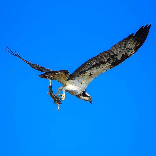 ماهیگیر به سبک عقاب+ عکس