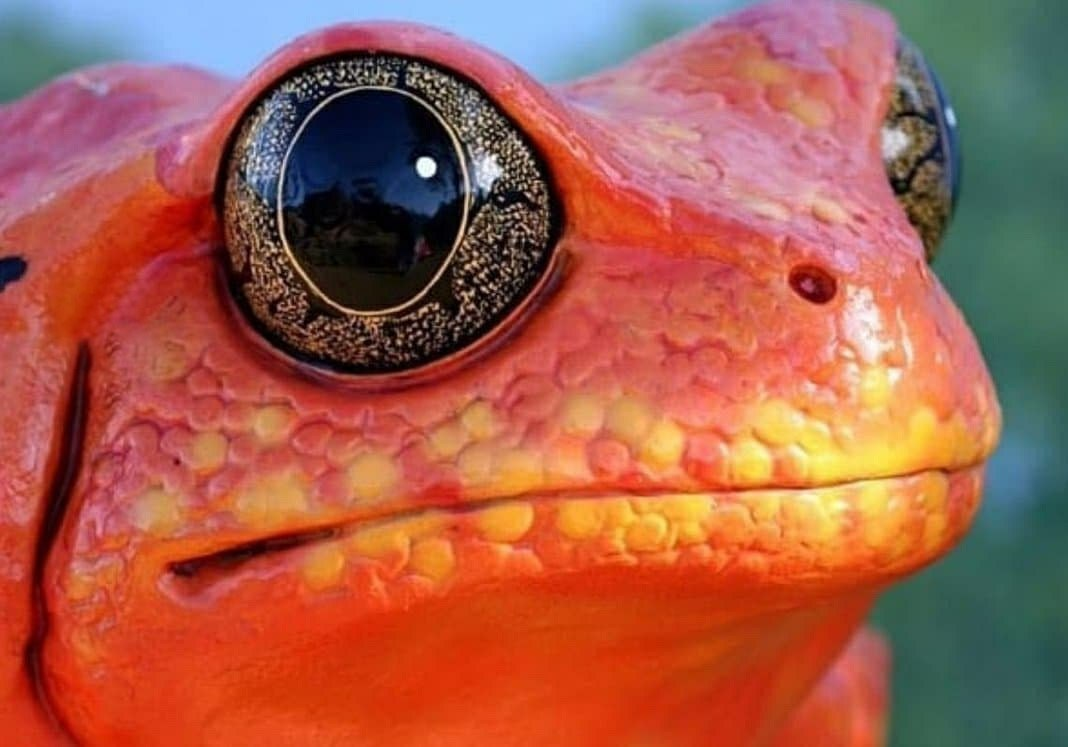 زیباترین چشمان در میان جانوران + عکس