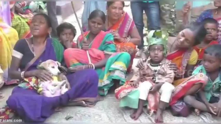 رسم عجیب یک قبیله؛ ازدواج کودکان با سگ