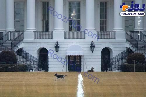 جولان ۲ سگ خانواده جو بایدن در محوطه کاخ سفید+عکس