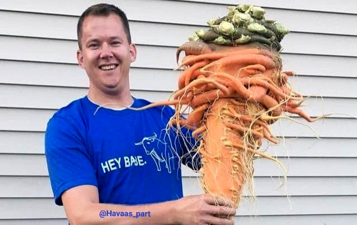 سنگین ترین هویج دنیا +عکس
