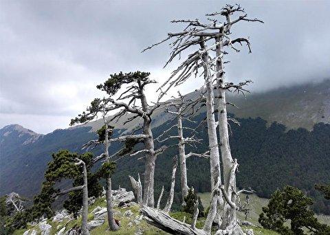 کشف فسیل کامل درخت ۲۰ میلیون ساله