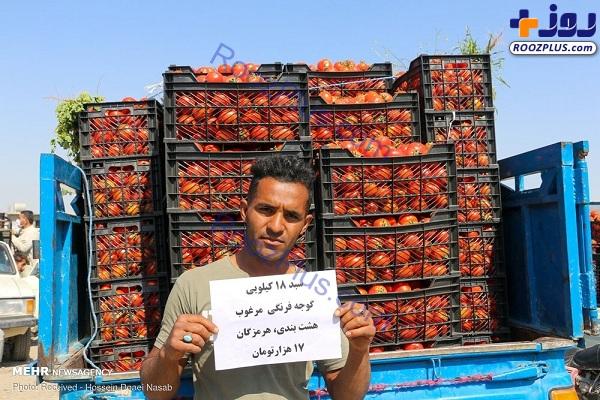 گوجه فرنگی کیلویی ۱۰۰۰ تومان+عکس
