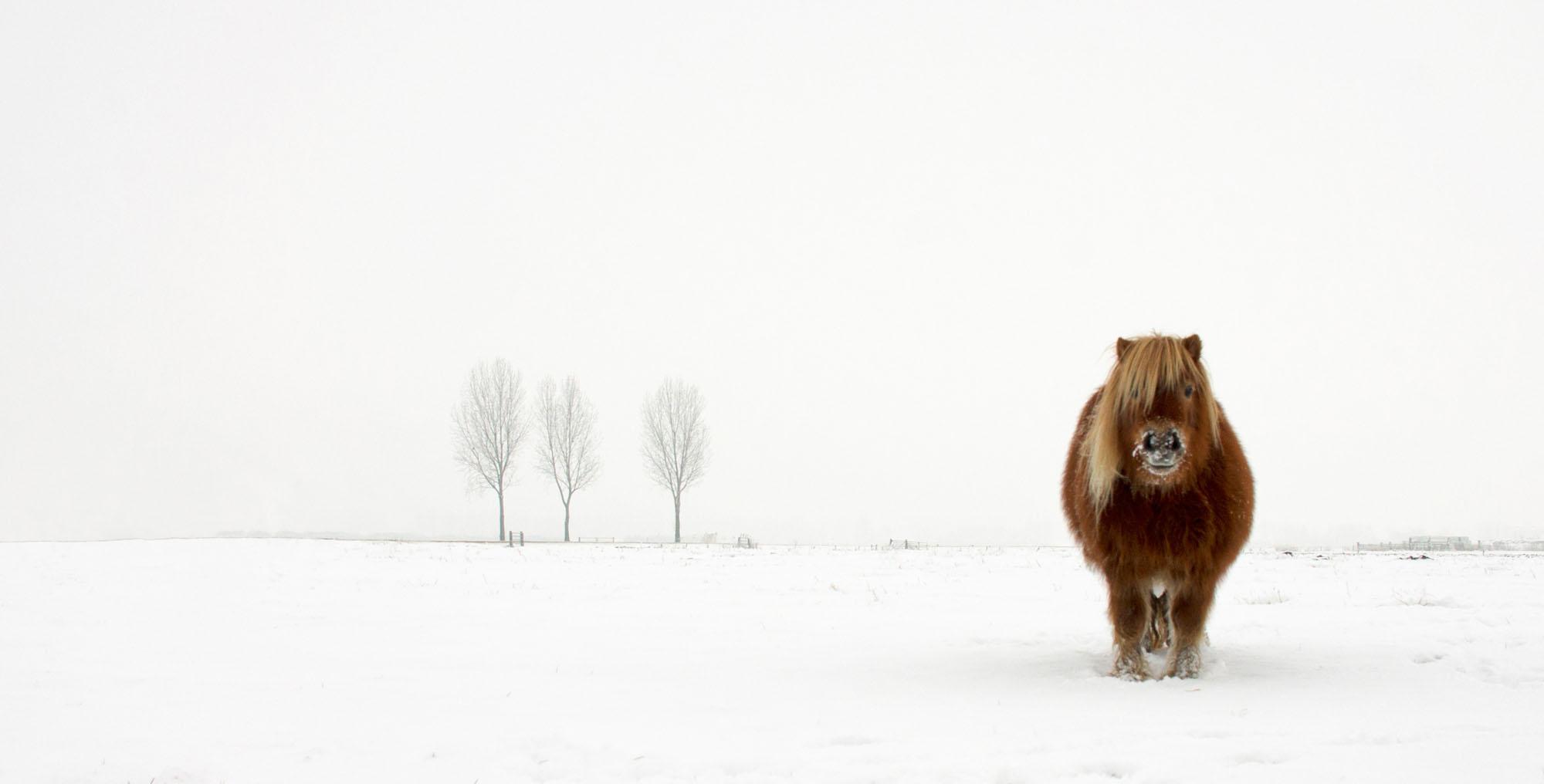 اسب منجمد شده در سرما + عکس