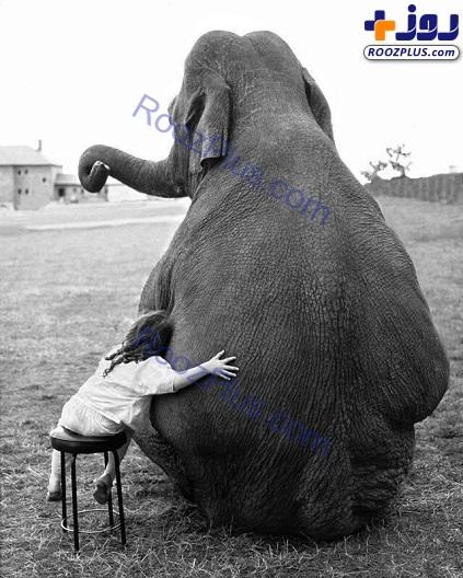 رابطه دوستانه دختربچه با فیل سیرک+عکس