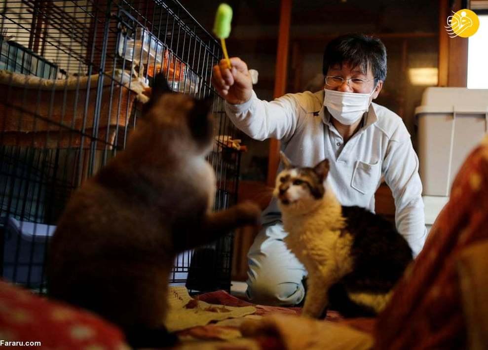 مردی که گربههای فراموش شده فوکوشیما را نجات داد + عکس