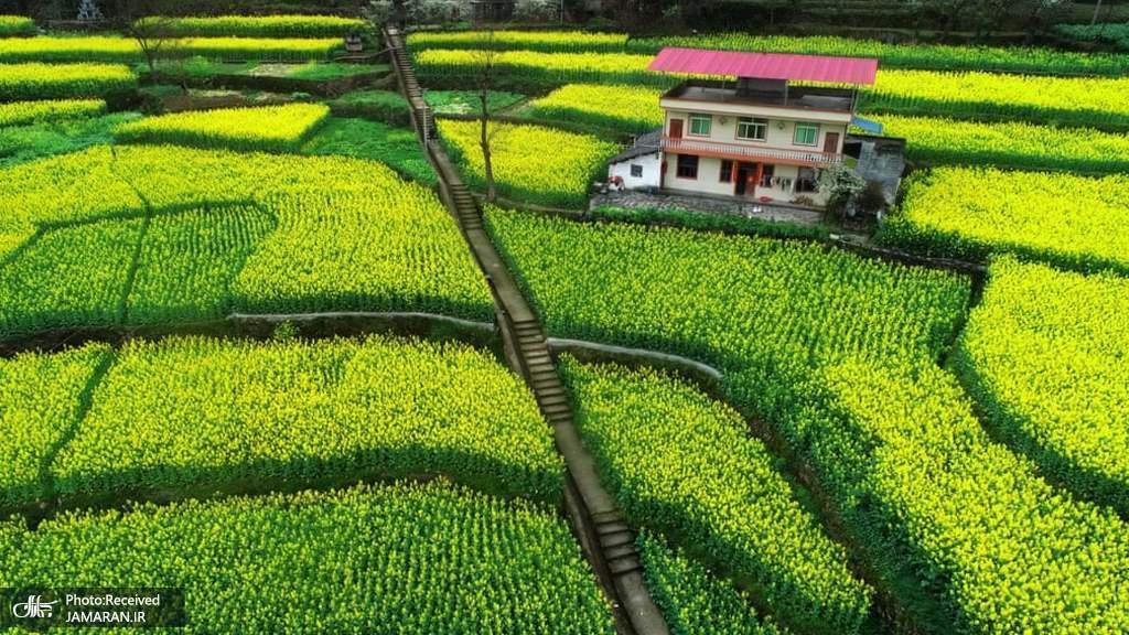 باغ گل رویایی در چین + عکس
