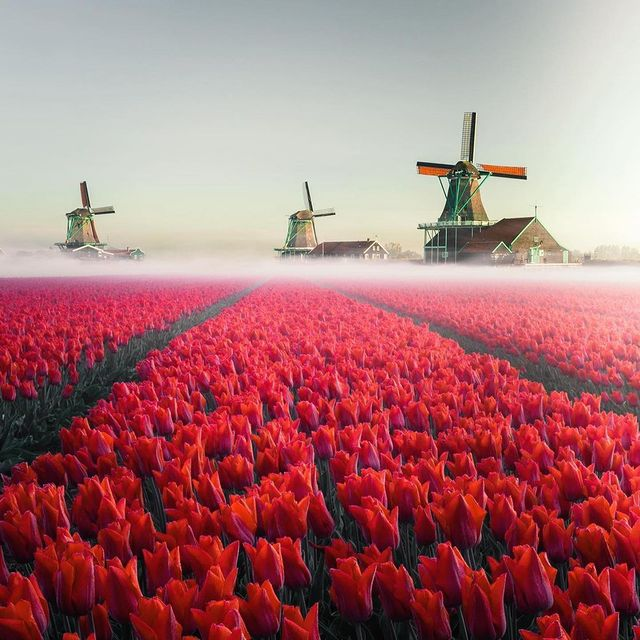 طبیعت مسحورکننده هلند + عکس