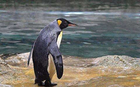 پناه بردن جالب پنگوئن به قایق از ترس نهنگ قاتل