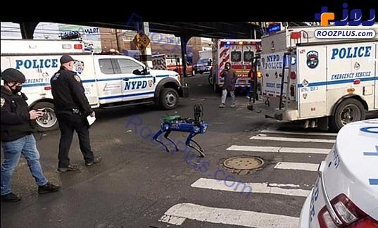 سگ مصنوعی پلیس در خیابان+عکس