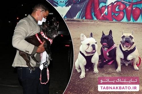 جایزه هنگفت خواننده معروف برای یابنده سگ های ربوده شده اش