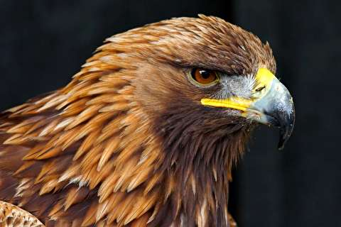 لحظه شگفت انگیز پلک زدن عقاب به شکل آهسته