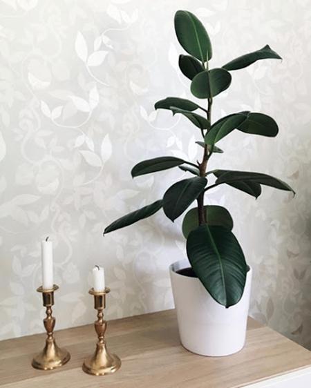 گلهای تصفیهکننده هوا، موثر در کاهش ابتلا به کرونا