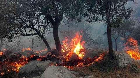 آتش سوزی عجیب در یک پارک