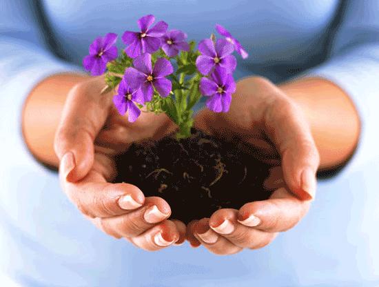 بهار، بهترین زمان برای نوسازی باغچهها