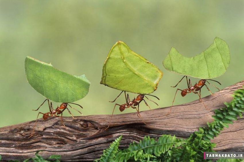 تبدیل شدن به مورچه، راه جدید رهایی از استرس قرنطینه