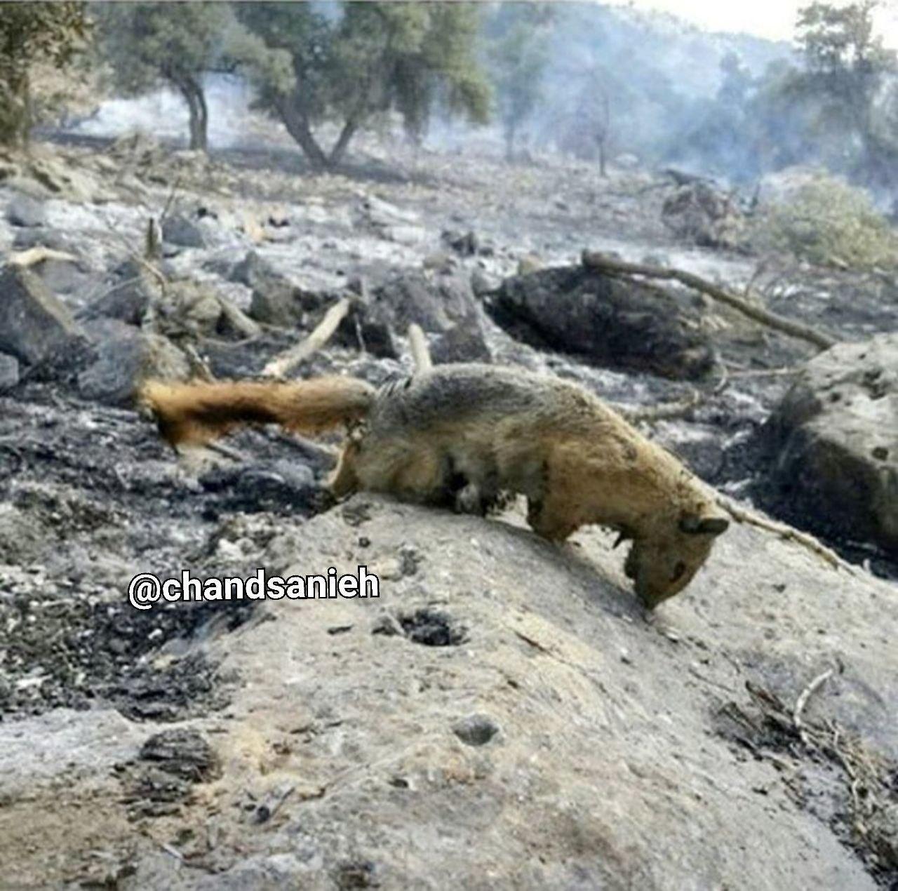 عکسی تکان دهنده از آتش سوزی جنگل های ایران