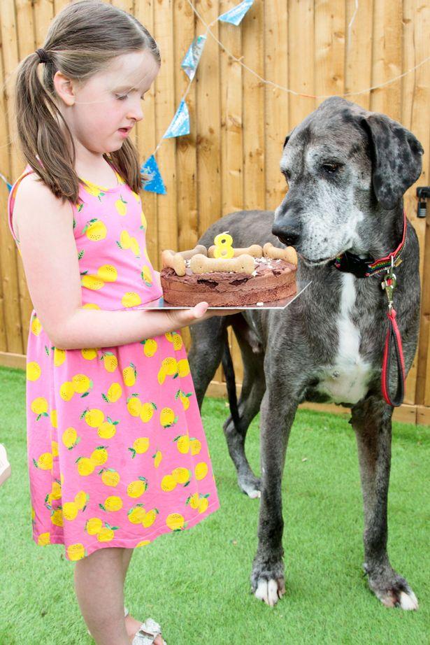 «فردی» بزرگ ترین سگ دنیا رکورد جدیدی زد + عکس