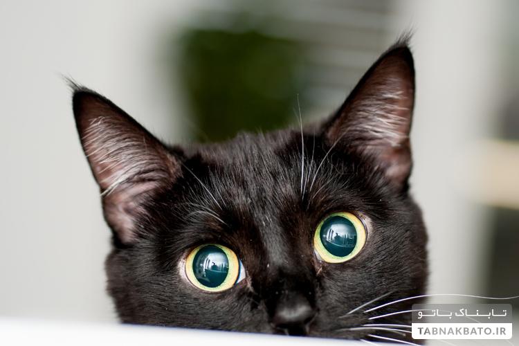 چرا نباید در چشمان گربهها خیره بشویم؟