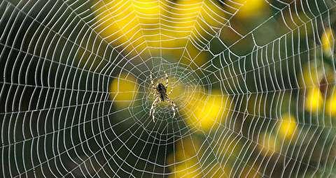 تار تنیدن عنکبوت، یک عملیات مهندسی پیچیده!