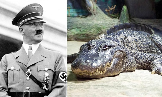 تمساح هیتلر در ۸۴سالگی از دنیا رفت+عکس